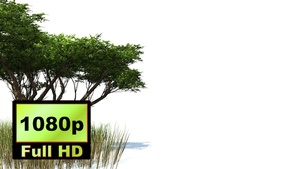 00028_Acacia tree and elephant grass with wind effect 3D animation