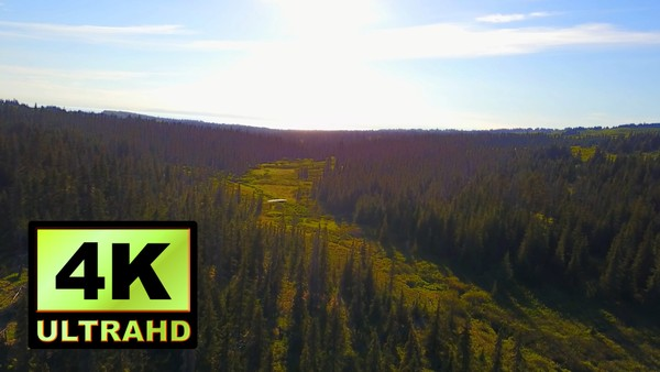 01131_Aerial drone footage of a beautiful pine forest in Alaska _4K UltraHD Version