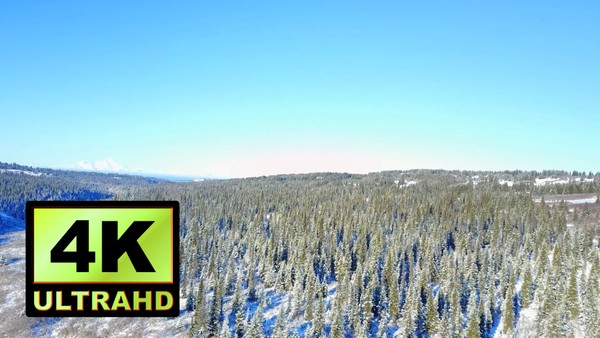 01734_aerial drone footage of a snowed pine forest in Alaska_4K UltraHD Version