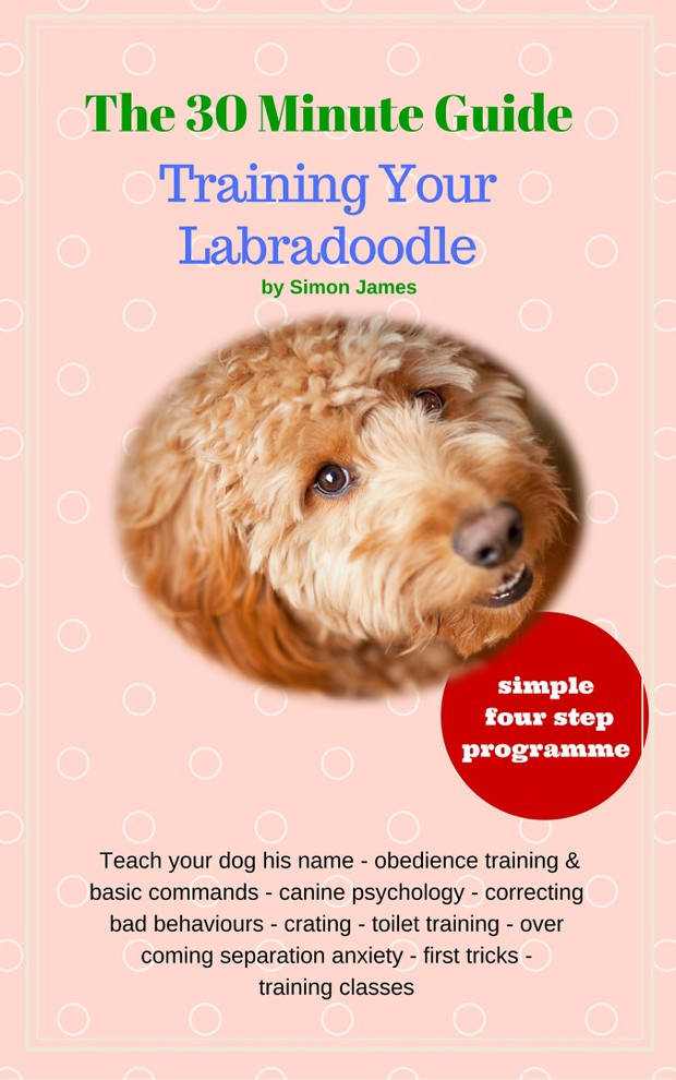 The 30 Minute Guide: Training Your Labradoodle