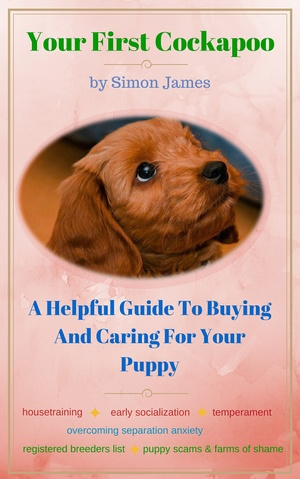 Your First Cockapoo: A Helpful Guide To Buying And Caring For Your Puppy