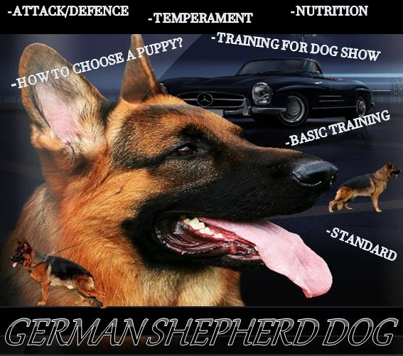 German Shepherd Dog eBook