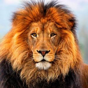 Lion's Gate Transmission, Teleconference 08:08:16