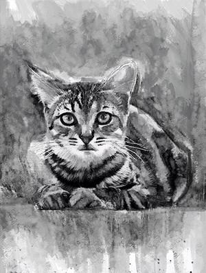 CUTE CAT - inkwash portrait - A3 300dpi