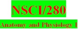 NSCI 280 Week 2 Anatomy & Physiology Revealed Worksheets