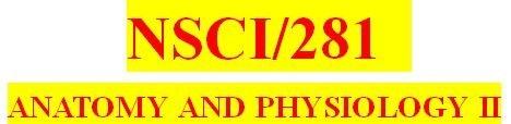 NSCI 281 Week 5 Week Five Quiz