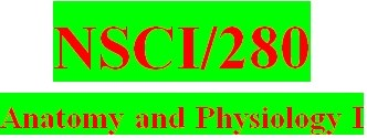 NSCI 280 Week 3 Anatomy & Physiology Revealed Worksheets