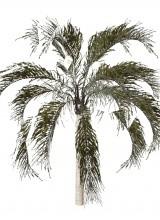 Palm tree MESH