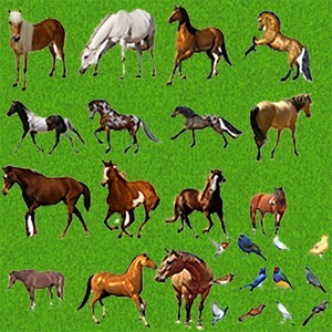 15 Horses in psd + some birds as gift