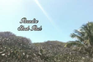 PARADISE STOCK PACK~BY OVERLOAD