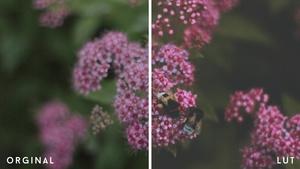 VIDEO | Baltic Sea Color Grading/Lut V.1