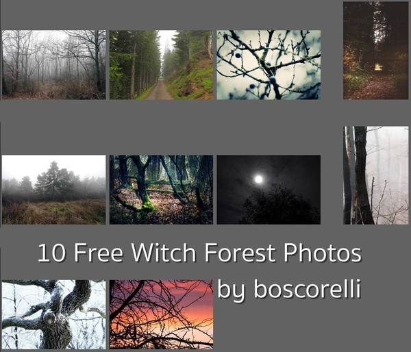 10 Free Witch Forest Photos
