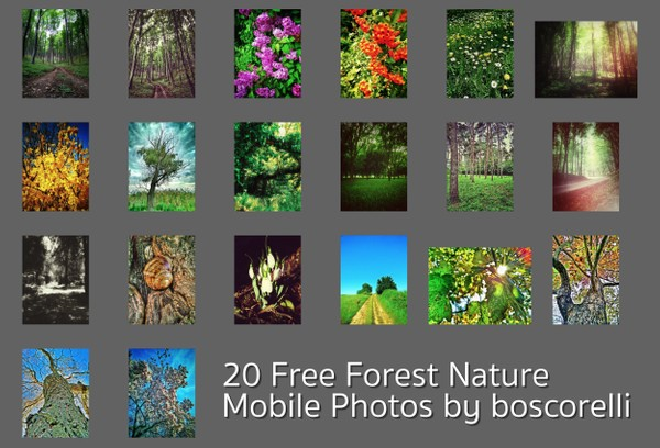 20 Free Forest Nature Mobile Photos