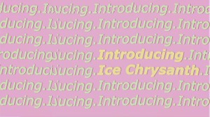 Introducing Ice Chrysanth