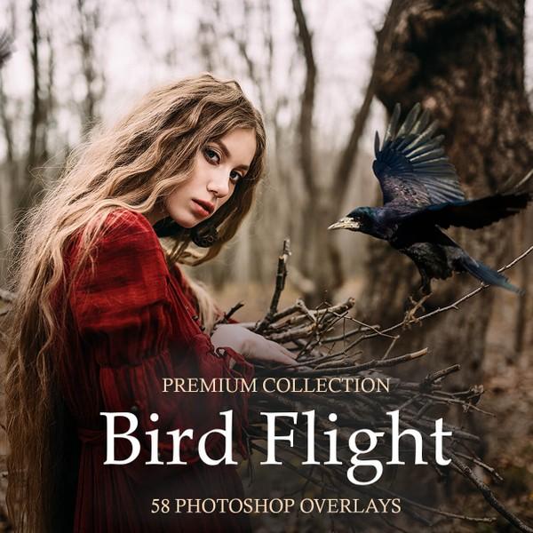 Bird Flight Photoshop Overlays