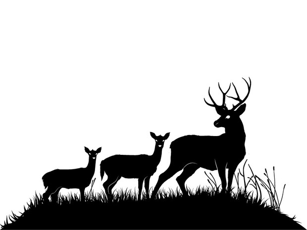 Deers and fawns silhouettes