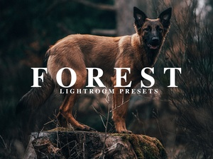 FOREST | Lightroom Presets