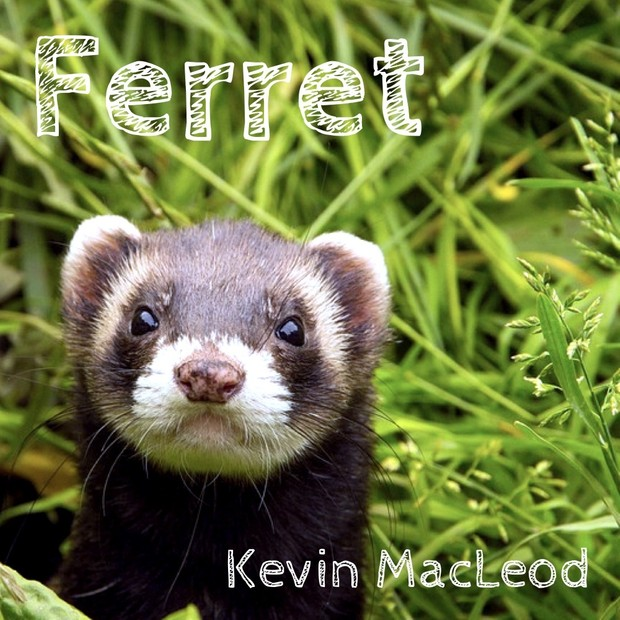Industrious Ferret