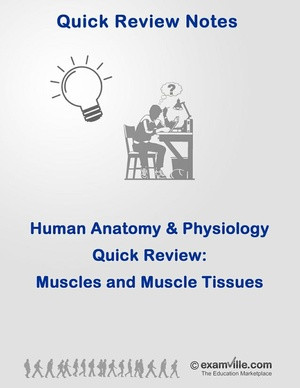 Muscles and Muschle Tissue Quick Review