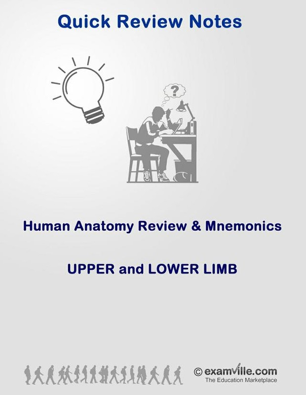 Anatomy Review And Mnemonics Upper And Lower Limbs