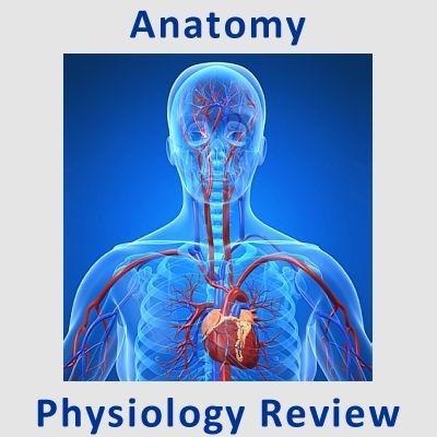 Examville.com - Physiology - Electrocardiogram