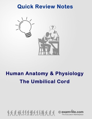 The Umbilical Cord (Quick Review Study Notes)