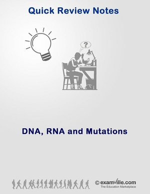Quick Review of DNA and RNA