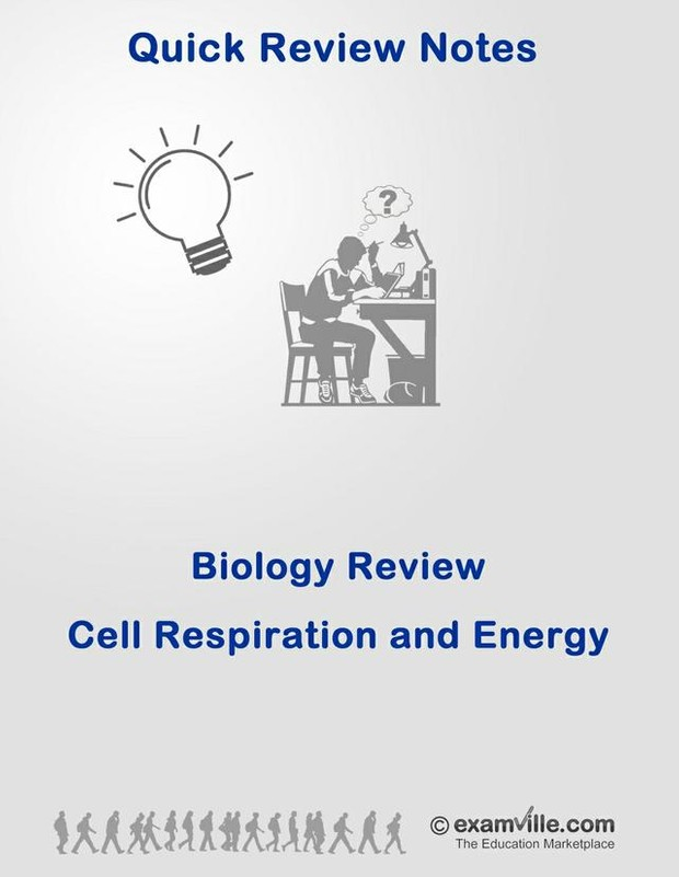 Biology Review - Cell Respiration