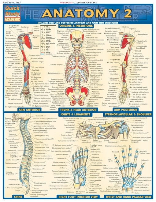 Anatomy 2 - Quick Review Study Guide for Health Sciences Students