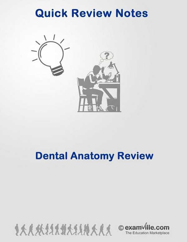 Dental Anatomy Review