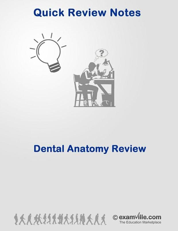 Dental Anatomy Review
