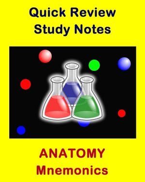 Anatomy Mnemonics for Health Sciences Students and Educators