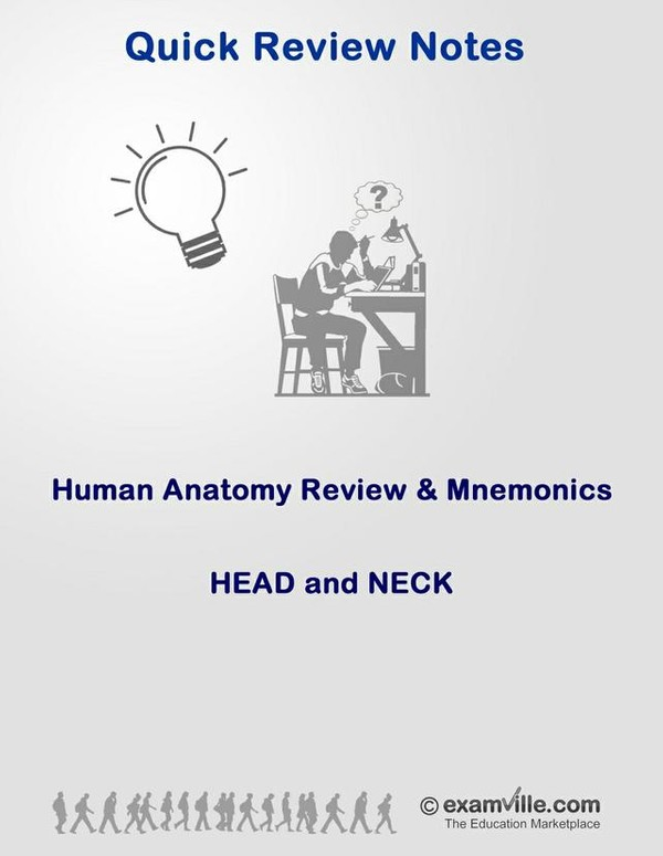 Anatomy Review and Mnemonics - Head and Neck