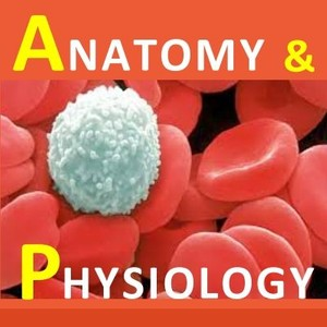 Examville.com - Physiology - Thyroid Gland