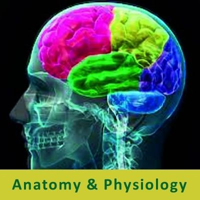 Review - Nervous and Endocrine Systems