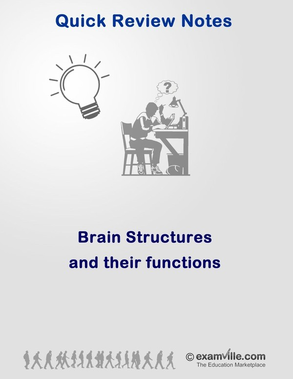Brain Structures and Functions: Neuroscience Review