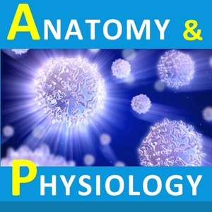 Anatomy & Physiology - Suffixes and Prefixes