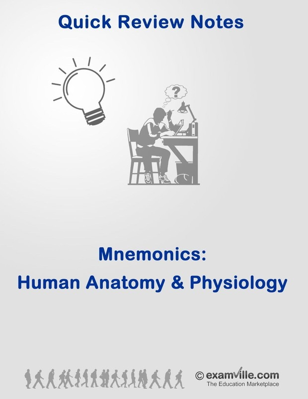 Mnemonics For Human Anatomy Physiology