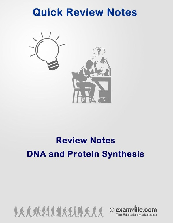 DNA and Protein Synthesis Review Notes