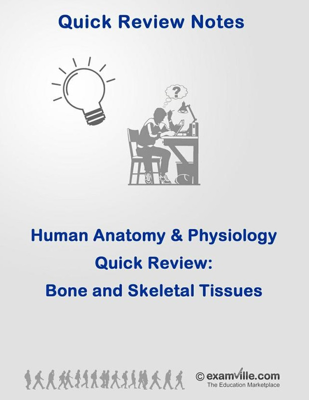 Bone and Skeletal Tissue Quick Review