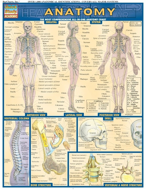 Anatomy - Quick Review Study Guide and Chart