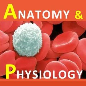 Examville.com - Physiology - Cardiac Output