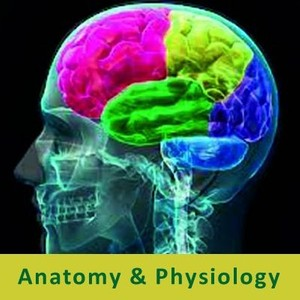 Nerve Muscular Physiology