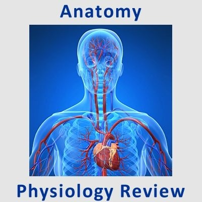 Muscles & Muscle Tissue Quick Review