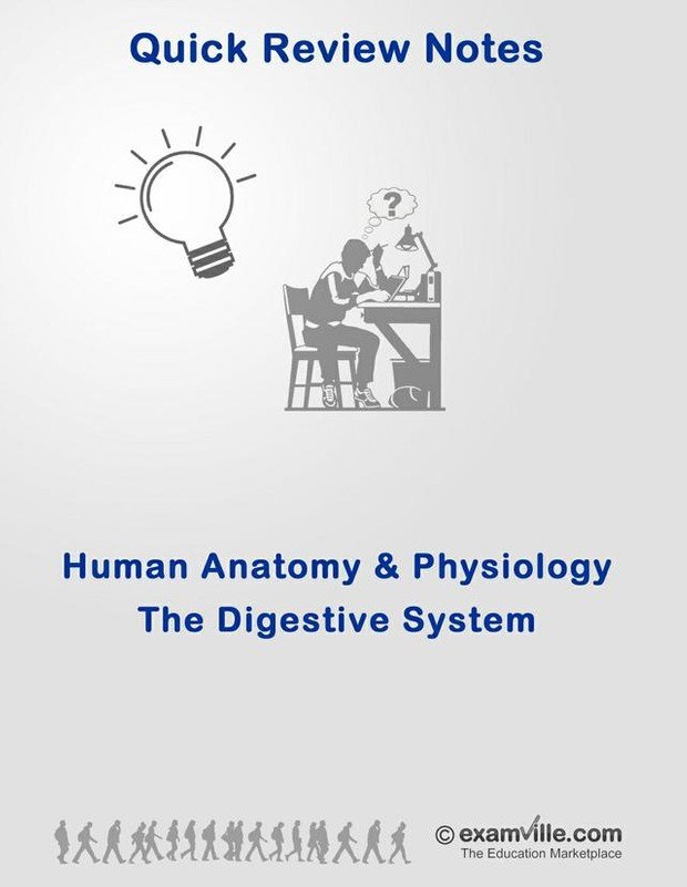 Quick Review: The Human Digestive System