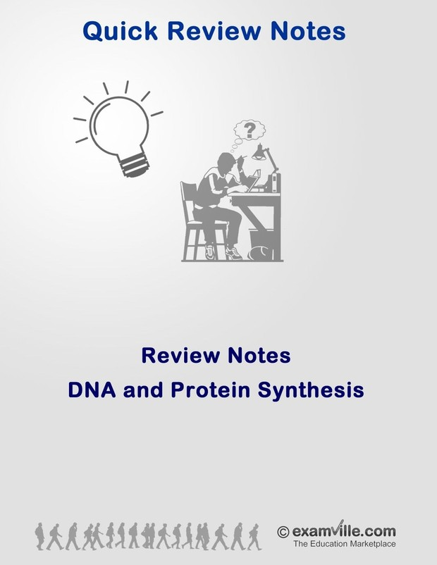 DNA and Protein Synthesis Quick Review