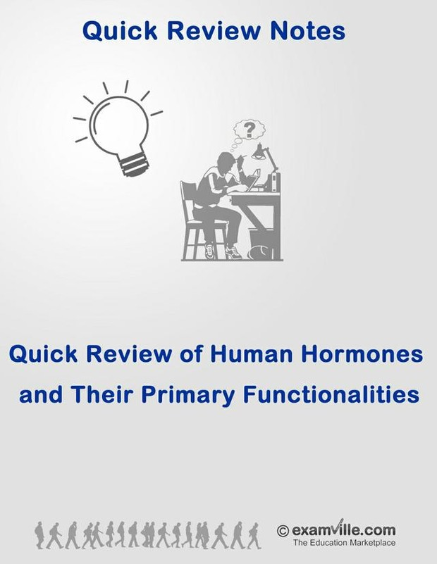 Quick Review of Human Hormones and Their Primary Functions