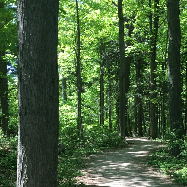 The Peaceful Forest Guided Relaxation mp3