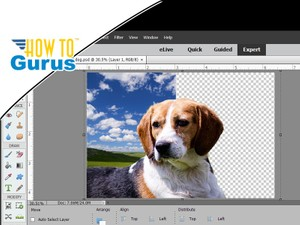 Photoshop Elements Beginner: Top Ten Things to Know Photoshop Elements Tutorial for Beginners