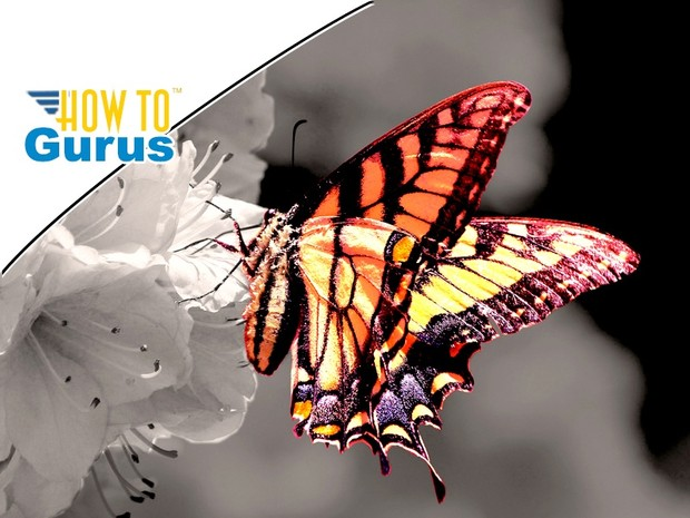 Photoshop Color Splash Effect : Black and White Photo with Color in CC 2017 CS6 CS5 Tutorial